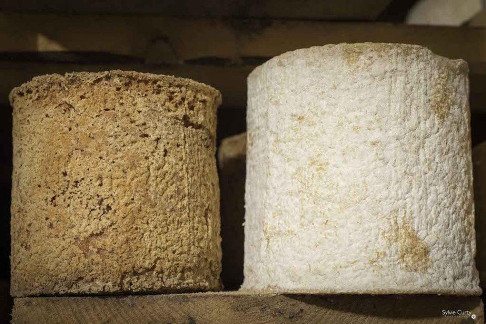 cave affinage fromages l'épicurium la Rochelle 1 (81)